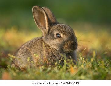 A rabbit shot in autumn in a garden