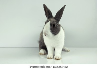 The rabbit sit on white table background. Easter day