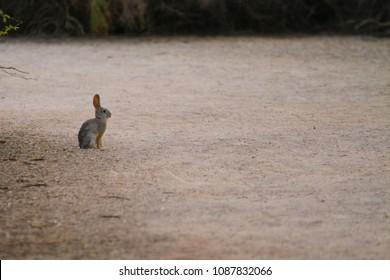 Rabbit Sitting Alone