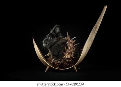 Rabbit sitting in a Basket at Studio
