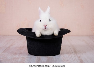 Rabbit sitting in the magic top hat