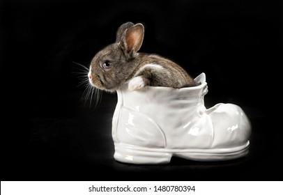 Rabbit sitting in a Vase
