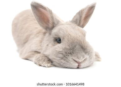 Rabbit small and cute is on the legs isolated on white background