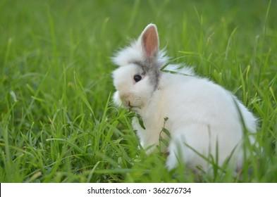Rabbit in spring.Funny baby.