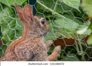 A rabbit stands up and leans on a garden fence, looking into the green garden helplessly.