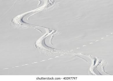 Rabbit tracks crossing ski tracks in the powder snow