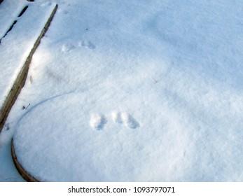 Rabbit Steps in Snow Images, Stock Photos & Vectors | Shutterstock