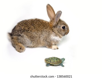 Rabbit and turtle are ready to race isolated white background