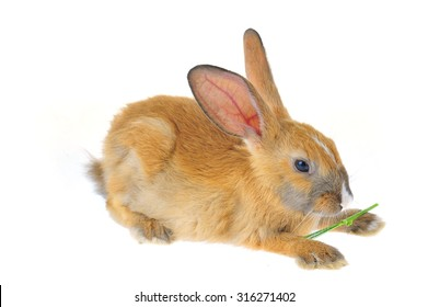 The rabbit in a white background