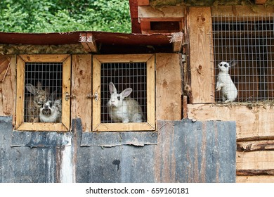 Rabbits in a cage at farm