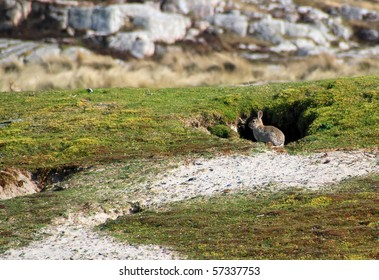 Rabbits hole