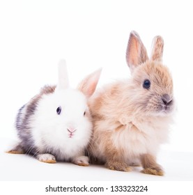 Rabbits  on a white background