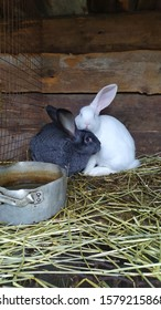 rabbits for setkey beautiful amonog senana ulice - Shutterstock ID 1579215868