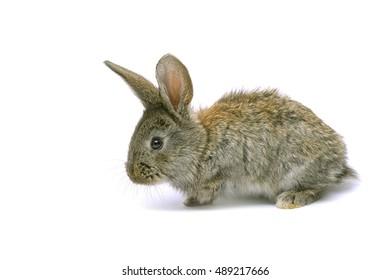 Rabbits sitting on white background