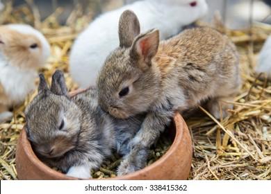 rabbits sleep