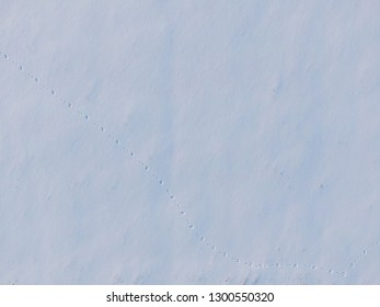 Rabbits steps on the snow