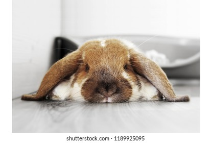 rabit bunny cute