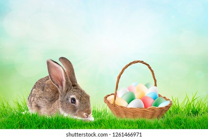 Rabit with eggs in the blanket in the field for Easter