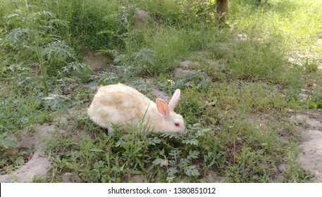 Rabit feeling hungery and eating grass