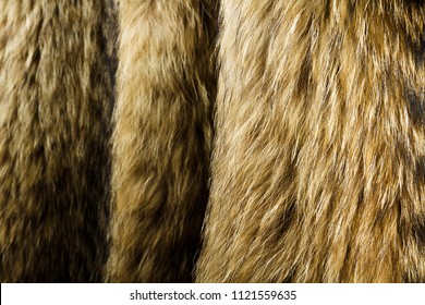 Raccoon dog fur. Useful as texture or background.