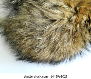 Raccoon fur on white background. Texture of animal fell
