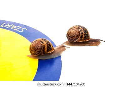 A race between two snails for winning a snail race, two snails crossed the start, one ahead of the second, on a white background, not one, close