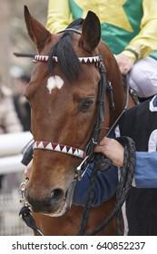 Race horse head with jockey. Paddock area. Vertical