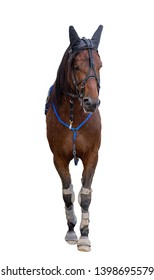 race horse jockey isolated on a white background, the horse stands in front