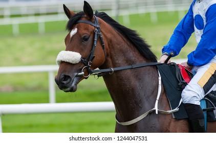 Race horse and jockey on the race track