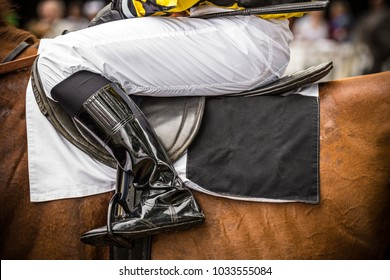Race horse with leg of jockey, close-up.