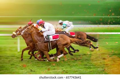 Race Horses With Jockeys On The Home Straight Shaving Effect