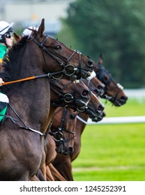 Race horses lined up in a row at the start of a race