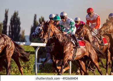 Race horses running towards the finish line.