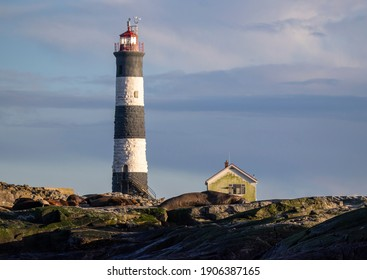 Race Rocks Lighthouse with elephant seal in foreground, January 25, 2021 British Columbia Canada