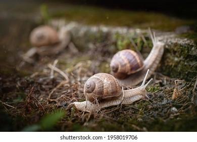 Race.arden snails after the rain. - Shutterstock ID 1958019706