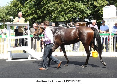 Racehorse being auctioned off in the Winners Enclosure after winning a Selling Race at Thirsk Races : Thirsk Racecourse, Thirsk, Nth Yorkshire, UK : 4 July 2018 : Pic Mick Atkins