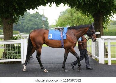 Racehorse BLESS HIM owned by Qatar Racing being led underneath archway of trees at Nottingham Races : Colwick Park, Nottingham Racecourse, Nottingham, UK : 30 May 2018 : Pic Mick Atkins