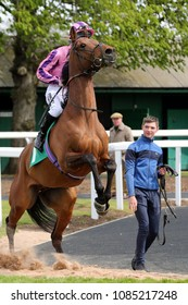 Racehorse (Dutch Coed) ridden by Lewis Edmunds rears up as he leaves the Parade Ring prior to racing : Thirsk Racecourse, Thirsk, North Yorkshire, UK : 30 April 2018 : Pic Mick Atkins
