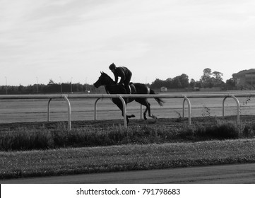 Racehorse Galloping at the Curragh