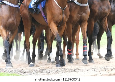 Racehorse legs and hooves in the dust whilst waiting to race at Market Rasen Races : Market Rasen Racecourse, Lincolnshire, UK : 1 June 2018 : Pic Mick Atkins