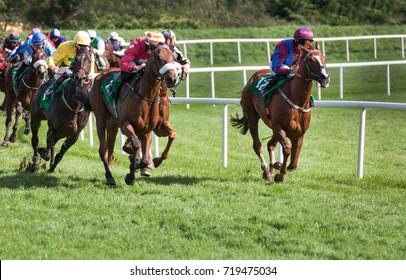 Racehorses and jockeys galloping towards the finish line