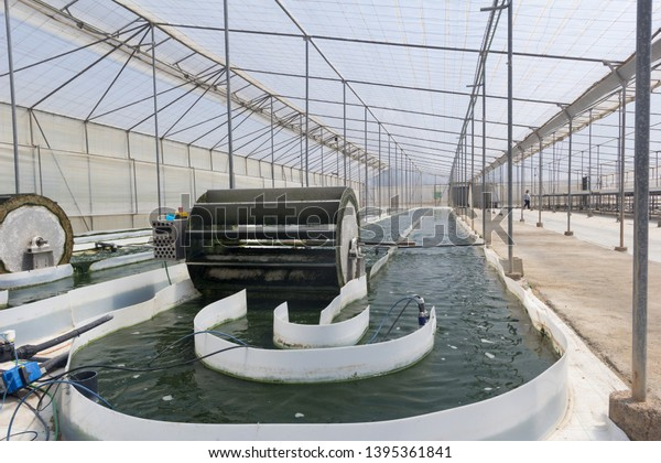 Raceway photobioreactor open for the cultivation of microalgae inside a greenhouse