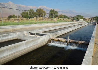Raceways for raising trout at Fish Springs Hatchery, Owens Valley, California, USA