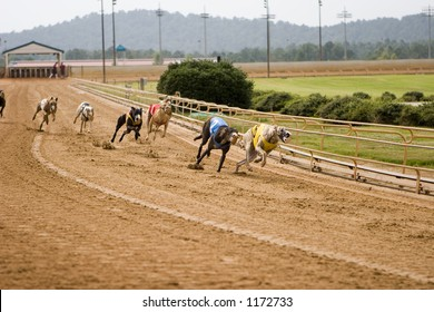 Racing greyhounds on the track