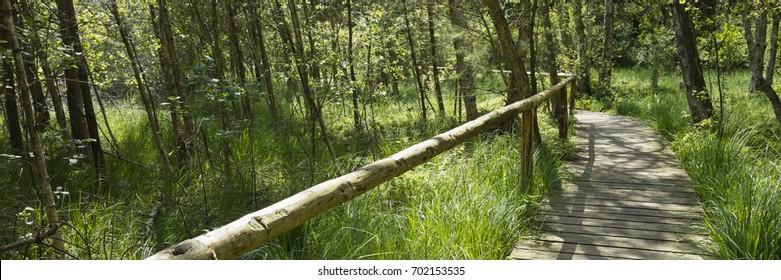 Rack through the forest, Mueritz-National park, Mecklenburgische Seenplatte, Mecklenburg-Vorpommern, Germany, Europe