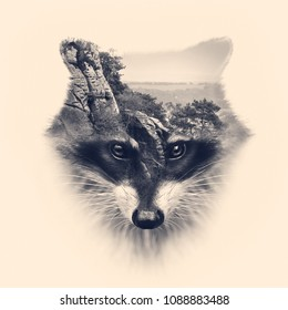 racoon face with double exposure effect