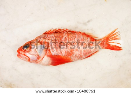 Radfish On Marble Slab Stock Photo Edit Now 10488961 Shutterstock