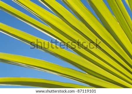 Radial natural pattern created by palm leaves with blue sky in the background.