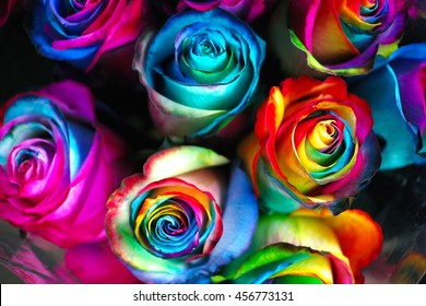 Radiant Psychedelic Multi Hued Roses in Intense Contrasting Tones.