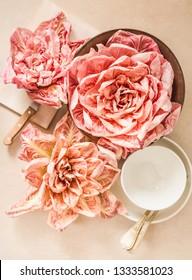 Radicchio beautiful pink salad del Veneto, Italy.